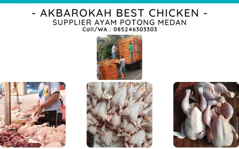 Harga Ayam Potong di Medan – 085246303303